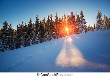 winter landscape glowing by sunlight - Majestic winter...