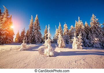 winter landscape glowing by sunlight - Majestic winter...