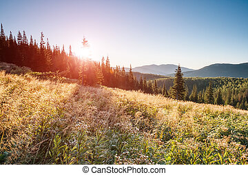 Fantastic summer scene - A great view of the hills glowing...