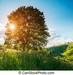 Fantastic summer scene - View of lonely tree on a hill slope...