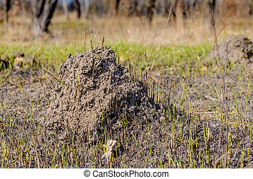 Clod of earth called molehill, caused by a mole, in a field...