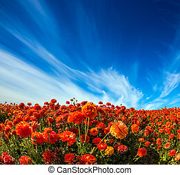 Light cirrus clouds over the flowers