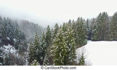 Foggy winter in the Forest - Aerial Flight