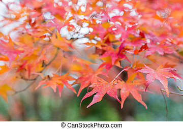 Red maple leaf on the tree during autumn season