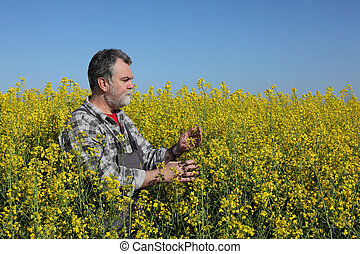 Farmer examine blossoming rapeseed field