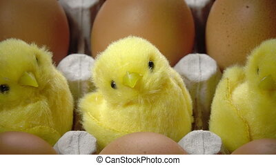 Toy chicken in a shell of bright Easter egg lie in the...