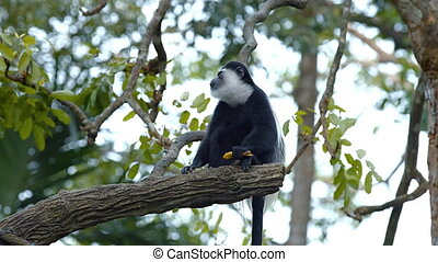 Adorable Black and White Monkey at the Zoo - Adorable,...