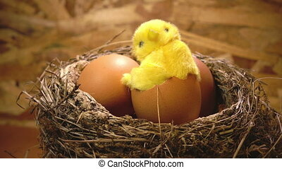 Toy chicken in a shell of egg in a nest with eggs,