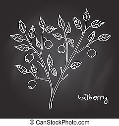 Bilberry ripe berry - Bilberry ripe. Hand drawn botanical...