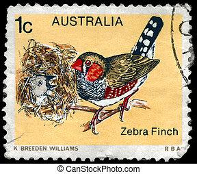 AUSTRALIA - CIRCA 1979 Zebra Finch - AUSTRALIA - CIRCA 1979:...