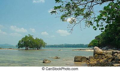 Mangrove Trees near a Rocky Tropical Beach. FullHD 1080p...
