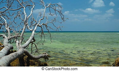 Deadfall Tree Rests on Logs over Tropical Beach.