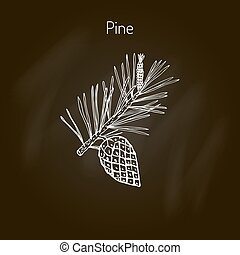 Pine branch with pine cone. Hand drawn botanical vector...