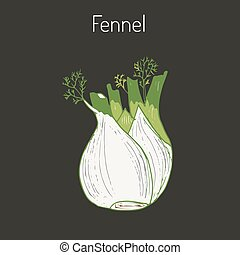 Aromatic herbs collection - fennel