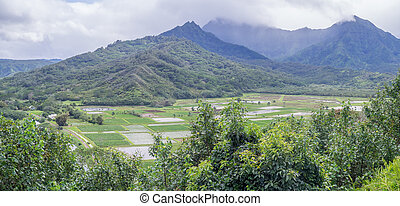 Hanalei Valley Taro fields on the Hawaiian island of Kauai....
