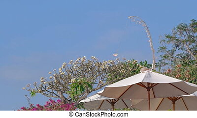 Gentle Breeze Stirring Trees and Tropical Beach Umbrellas -...