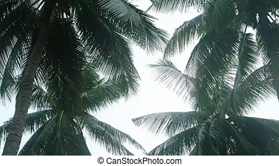 Tropical Palm Trees Sway in the Wind under an Overcast Sky -...