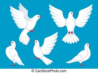 Set of five white doves. Beautiful pigeons faith and love...