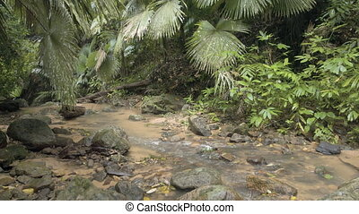 Tropical trees over banks of stream as it passes through...