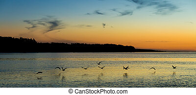 Sun Down Flight - Some bird flying low over a river at...