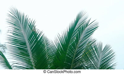 Palm Fronds against an Overcast sky - Tropical palm fronds...