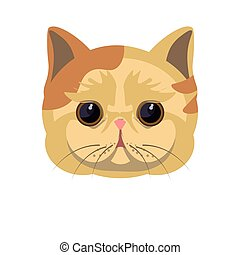 Exotic shorthair kitten in beige color with spots - Exotic...