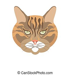 Abyssinian old cat colorful portrait isolated on white....