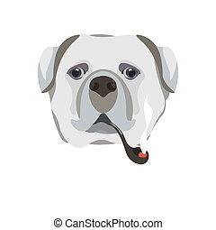 Bullmastiff breed dog with smoking pipe close-up portrait on white