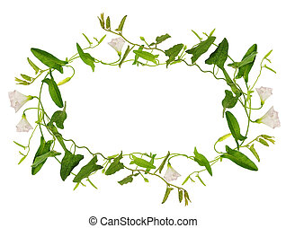 bindweed, flor, hojas, marco