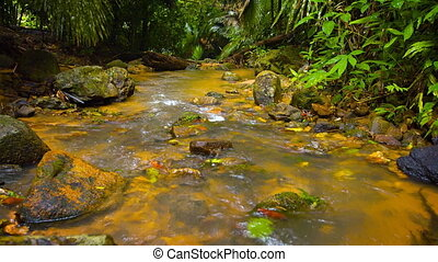 Stream in wet tropical forest, surrounded by palm trees and...