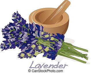Lavander flower vector. - Lavender flower vector isolated.