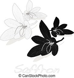 Saffron flower set. Vector. - Saffron flower set. Vector...