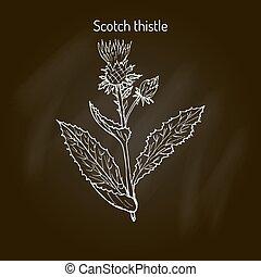 Milk Thistle medicinal plant - Milk Thistle Silybum marianum...