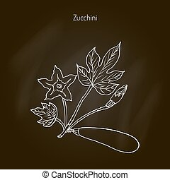 Zucchini food plant - Flowering and ripe fruits of zucchini...