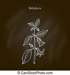 Atropa belladonna, or deadly nightshade, medicinal plant....