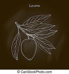 Lucuma. Organic superfood - Lucuma pouteria lucuma . Organic...
