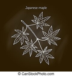 Japanese-maple tree branch