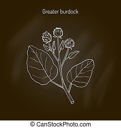 Burdock medicinal plant