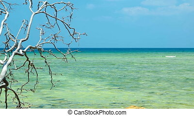 Dead Tree Branch Hangs over Rocky Tropical Beach. Video...