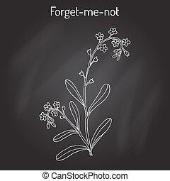 Forget-me-not Myosotis arvensis . Hand drawn botanical...