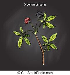 Eleutherococcus senticosus plant - Eleutherococcus...