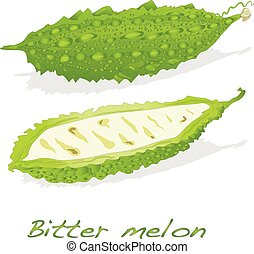 Bitter melon isolated - Bitter melon vector isolated on...