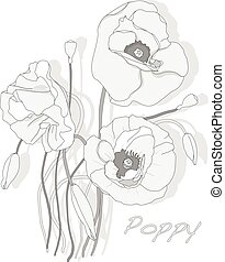 Red Poppy flower isolated on white background.
