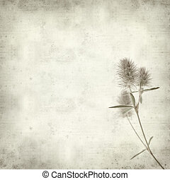 textured old paper background with hare foot clover