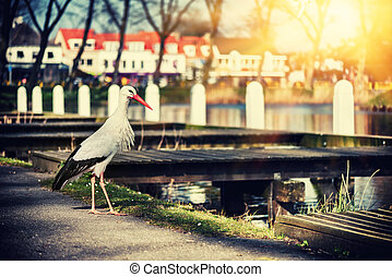Spring landscape with white stork in city park