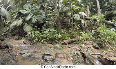 Water flows along rocky course of jungle stream on rainy...