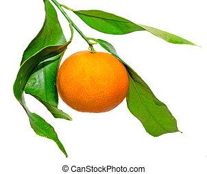 The mandarin orange (Citrus reticulata), also known as the mandarin or mandarine, isolated, white background.