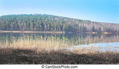 Lake and deep forest in spring