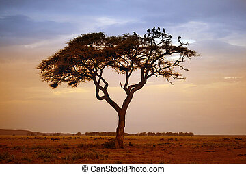 Amboseli national park - Tree in the African savannah....