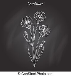 Cornflower Centaurea cyanus , medicinal and honey plant....